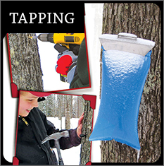 Equipment for Tapping Maple Trees