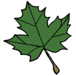 3-maple-leaf