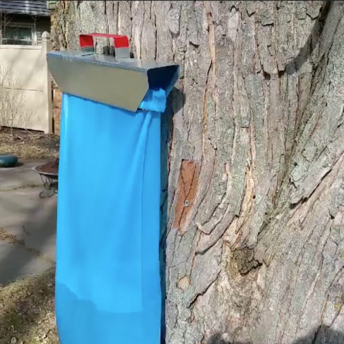 Collecting sap with bag holders