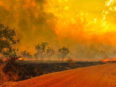 Smoky Lake would like to provide relief in wildlife recovery efforts in Australia
